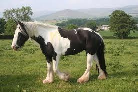 hästar - Sök på Google