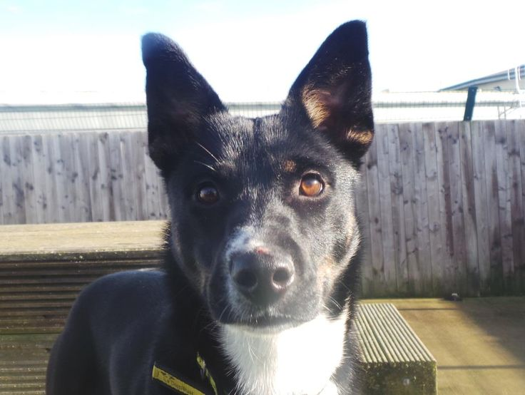 Looking at Maisie @dogstrust #rehomeadog