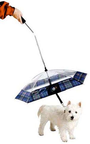umbrella for your dog