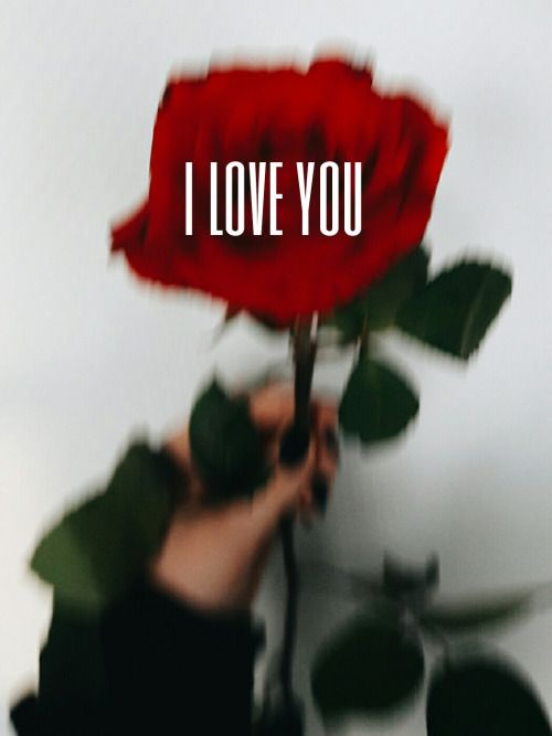 I Love You! #roseday #roses
