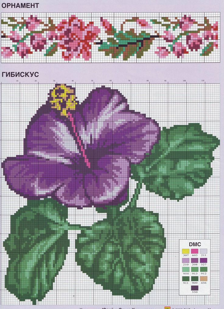 hybiscus flower and flower border cross stitch