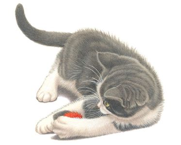 Kitten-Rode-Bal1 |