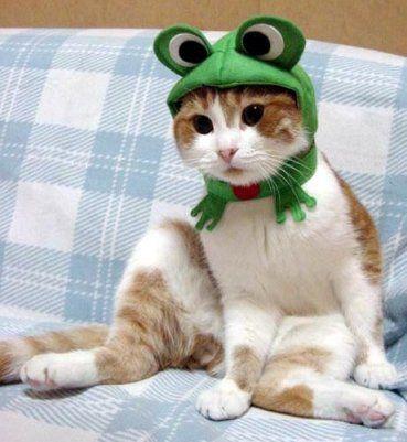 frog me long time