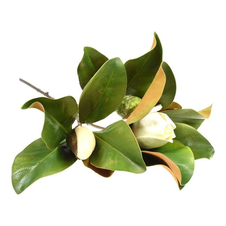 Magnolia Bud & Foliage. A long stemmed magnolia with three heads. Generous foliage with extremely realistic leaves. Beautifully mixed with the large magnolia bloom and other magnolia foliage.