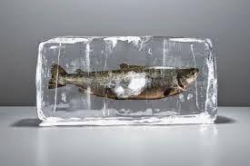 bagiamana makanan beku seafood yang sehat?