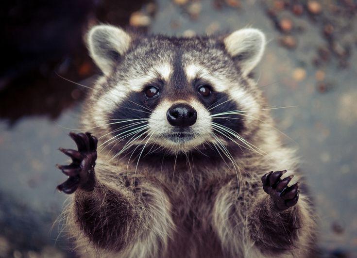 I'll catch you!: