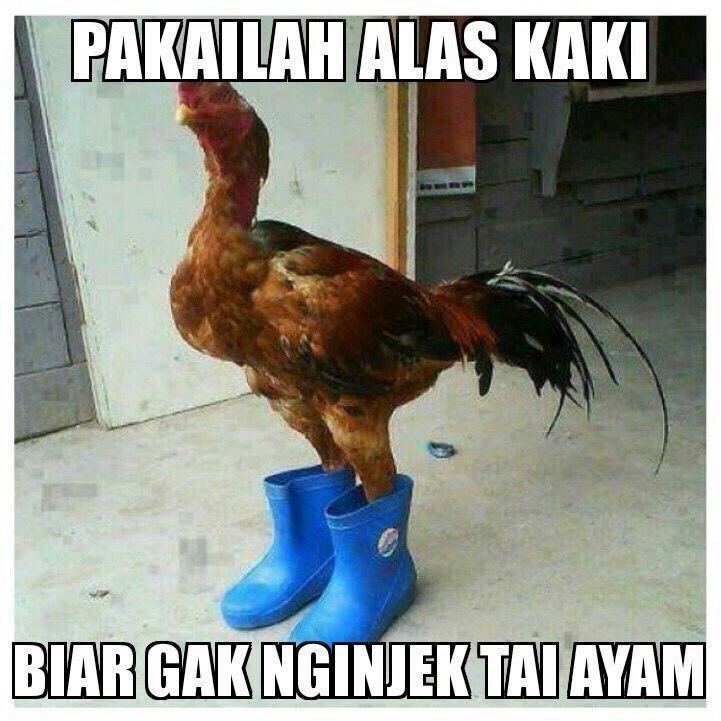 Pake alas kaki dlu hahahaa