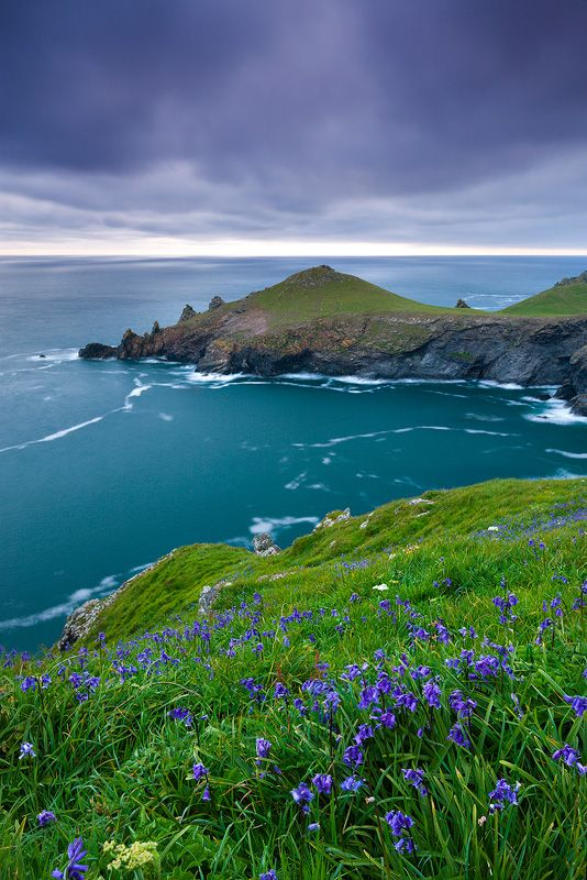 Clifftop Bluebells, Rumps Peninsula, Cornwall