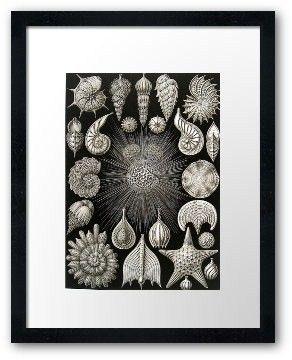 Ernst Haeckel Colored CORALS GUNFI Coral Art Print 2010 Original Book PLATE 63 64 Basimycete Schwammpilze Sea and Ocean Life Nature