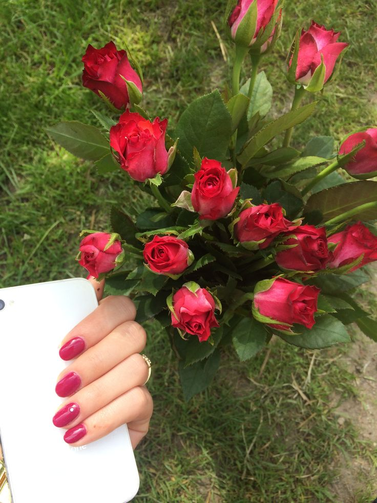 Roses , iPhone , simple red nails