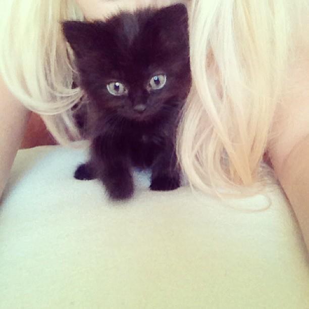 Black cat so cute