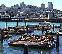 Pier 39, San Francisco, CA. - Stinky!