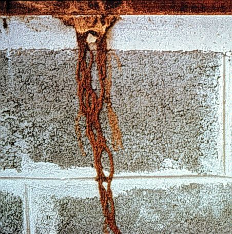 Signs Of Termites: How To Tell If You Have Termites - Signs of termites can vary from location to location, and also depend on the type of termite infesting your living area. This is everything you will need to know in order to address your issue thoroughly.