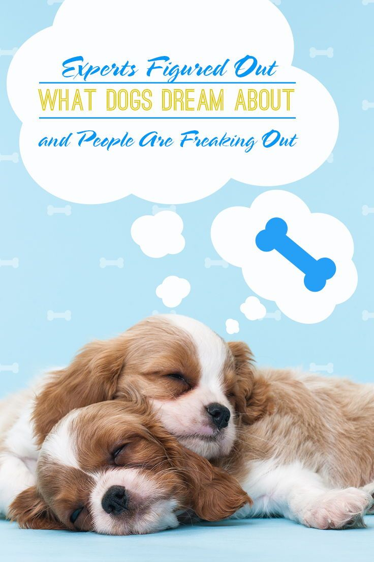 Why does the puppy dream Well find out
