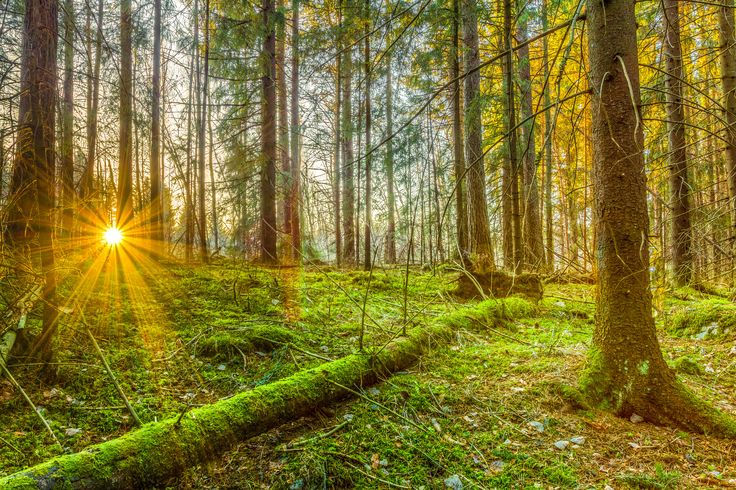 Sunset forest by Lauri Lohi on 500px