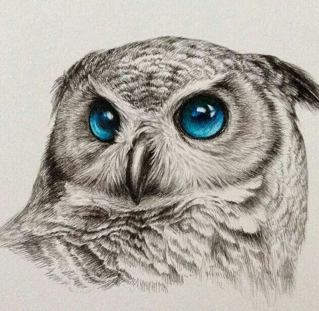 17 best ideas about owl drawings on pinterest owl sketch for Cool drawings of owls