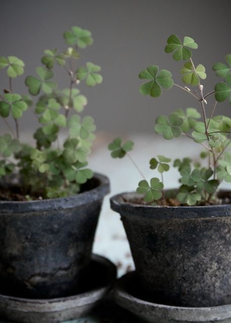 For subtle St. Partick's Day decor, grow covers in tiny planter pots.