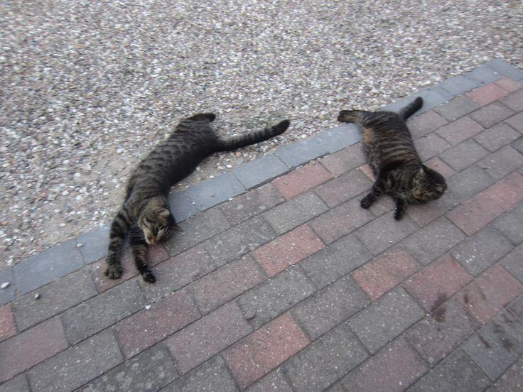 To smukke katte, der slænger sig i solen <3