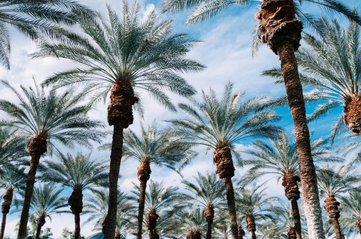Indian Wells, California - A Travel Guide (Palm Springs) (Palm Desert)