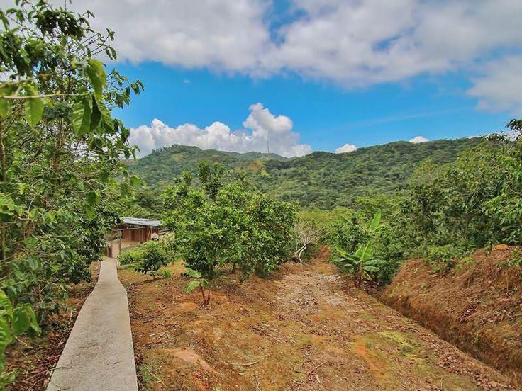Located on the Puerto Rico's Southern central coast, #HaciendaLasNubes resembles the once sought after haciendas of the past. A refined brand of small batch #coffee, this 6 acre coffee plantation has been regarded as a premium organic certified coffee brand since 1999.  #PRSIR #LifestyleRealEstate #Adjuntas #PuertoRico #RealEstate #Hacienda #land #acreage #coffeefarm #farmandranch #caribbean #mountainhome #hacienda #coffeeplantation #SothebysRealty #Sothebys #Realty