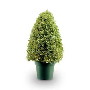 fake tree for porch or deck  National Tree Company 36 in. Boxwood Tree in Dark Green Round Plastic Urn-LBX4-36 at The Home Depot