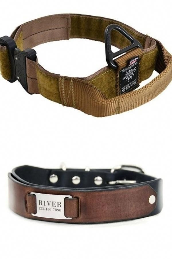 Best Doggie Collars For Both Small Large Dogs You Need A Shock