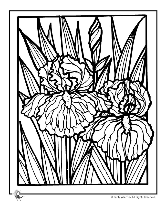 17 best images about line drawings of irises on pinterest for Iris flower coloring page