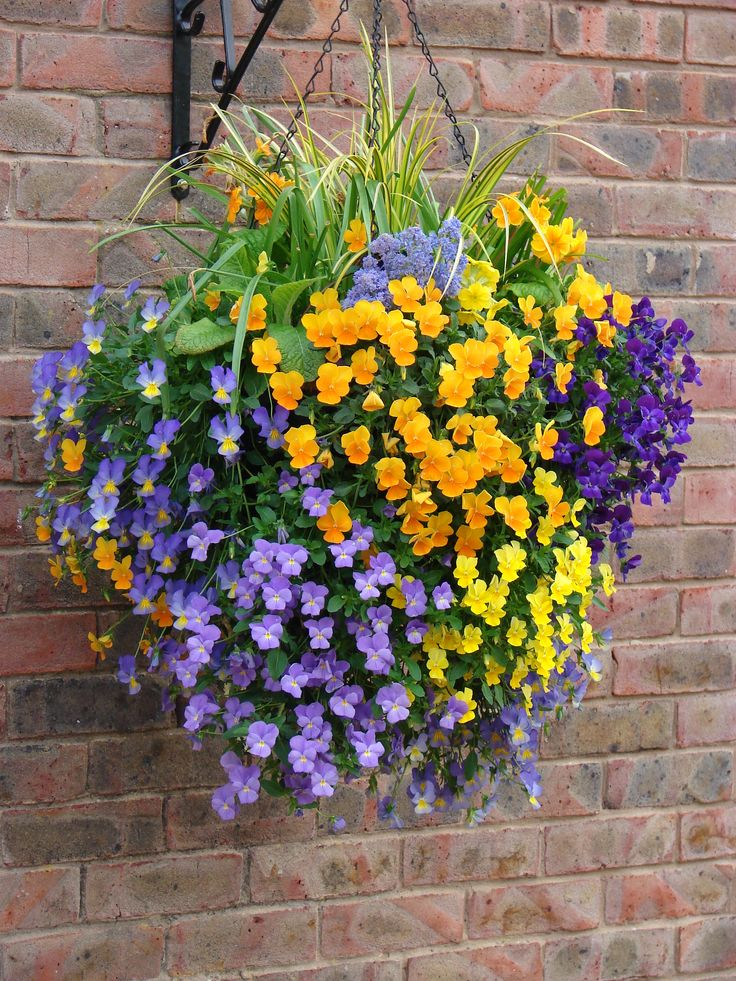 basket design | Home / Hanging Baskets / Spring Planted Hanging Basket ...
