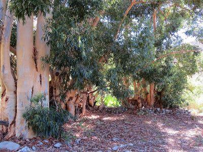 Karoo Hues: WELTEVREDE PICNIC (Part 2)    The rubicund colour...