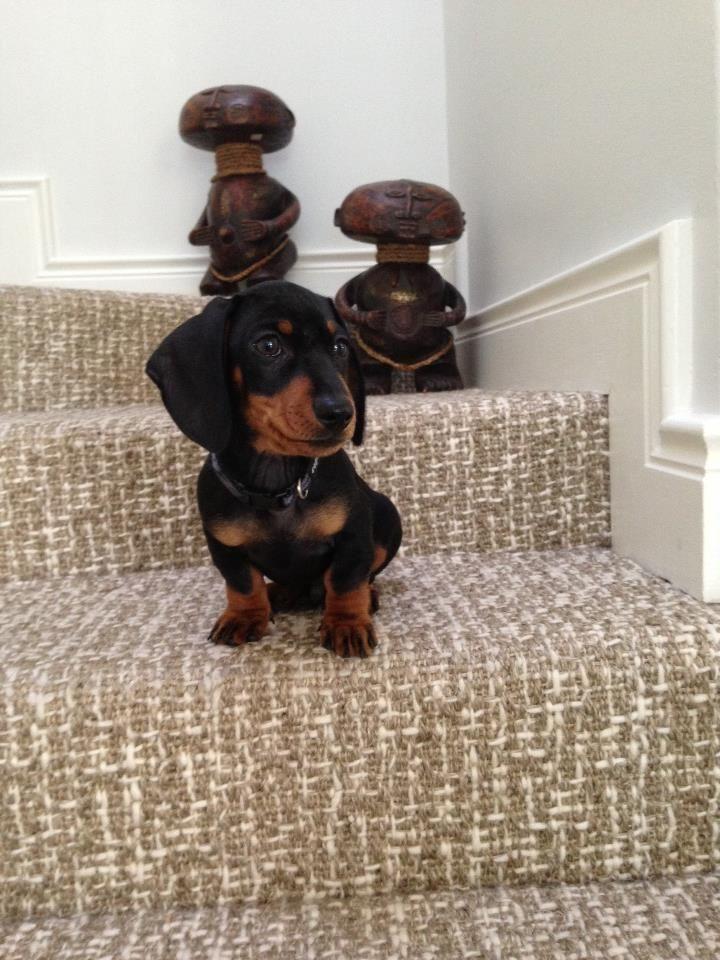 Nice dog on a nice carpet.