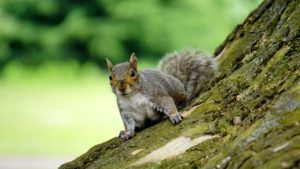 Squirrel Photo SlideShow - Top Rated Photos
