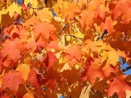 autumn leaves #myawcolour.
