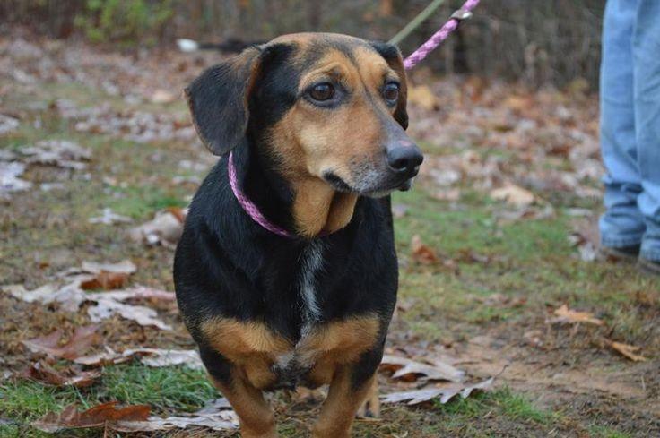 Shenandoah Valley Animal Service Center Adoption Search