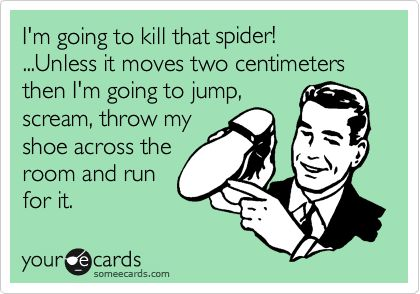 I'm going to kill that spider!...unless it moves two centimeters then I'm going to jump, scream, throw my show across the room and run for it.
