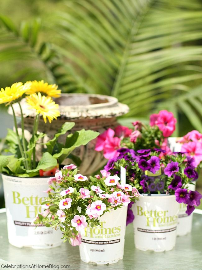 38 Best We Love Container Gardens Images On Pinterest | Container