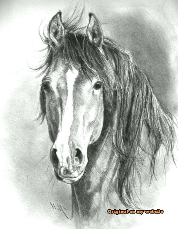 Drawing Art Tumblr Realistic Animal Pencil Drawings 30