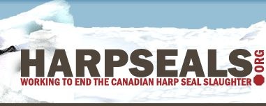 Write Letters for the Seals - Harpseals.org