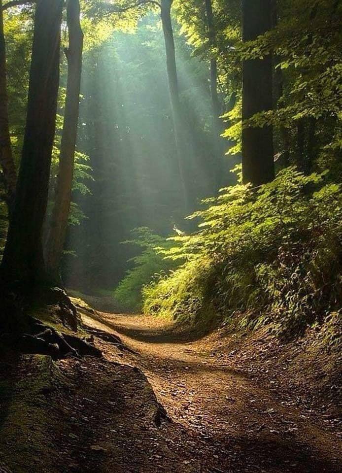Sunlit Forest Path Landscape Nature Photography Beautiful Landscapes