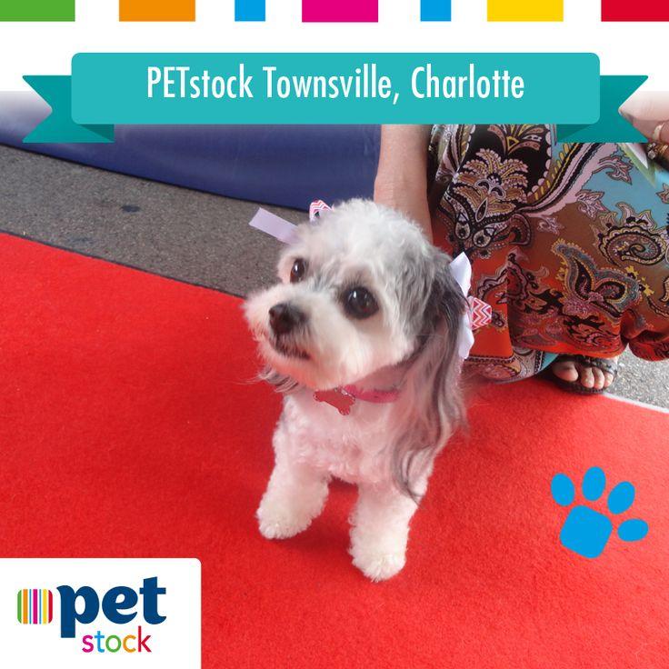 Charlotte the PETstock Townsville winner