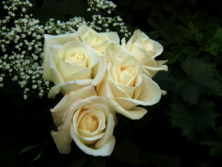 White Roses Bouquet HD Desktop Background Free Download HD ...