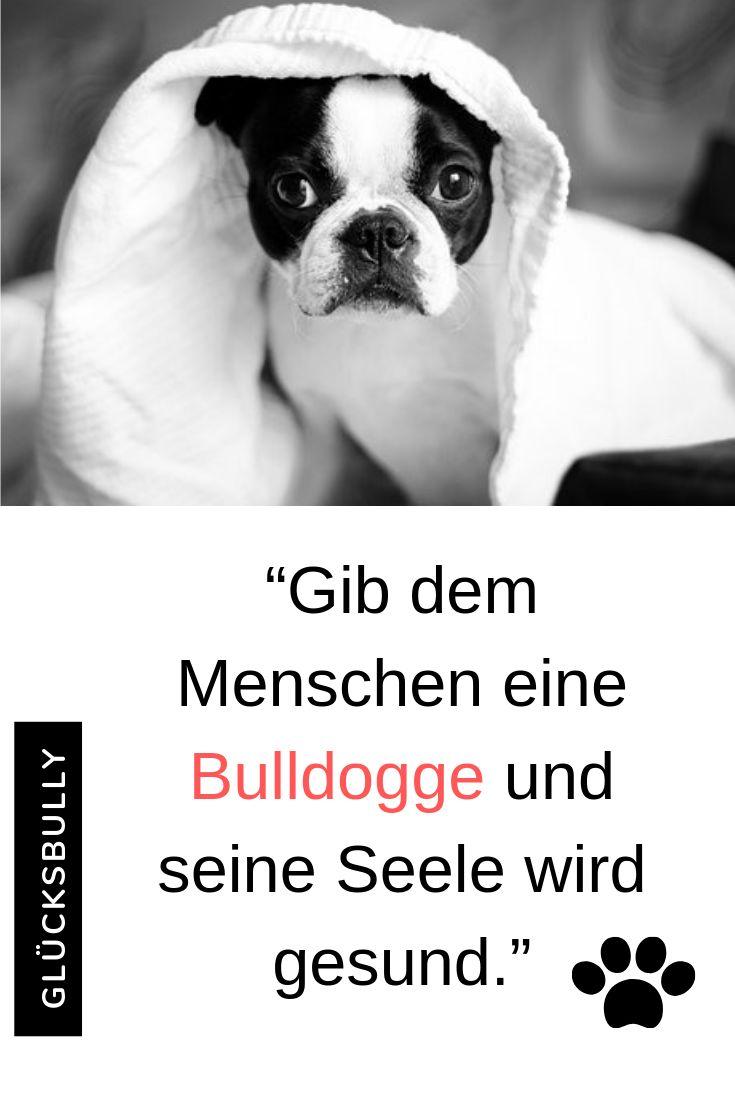 Wer Eine Bulldogge Hat Der Hat Auch Gleichzeitig Einen Treuen
