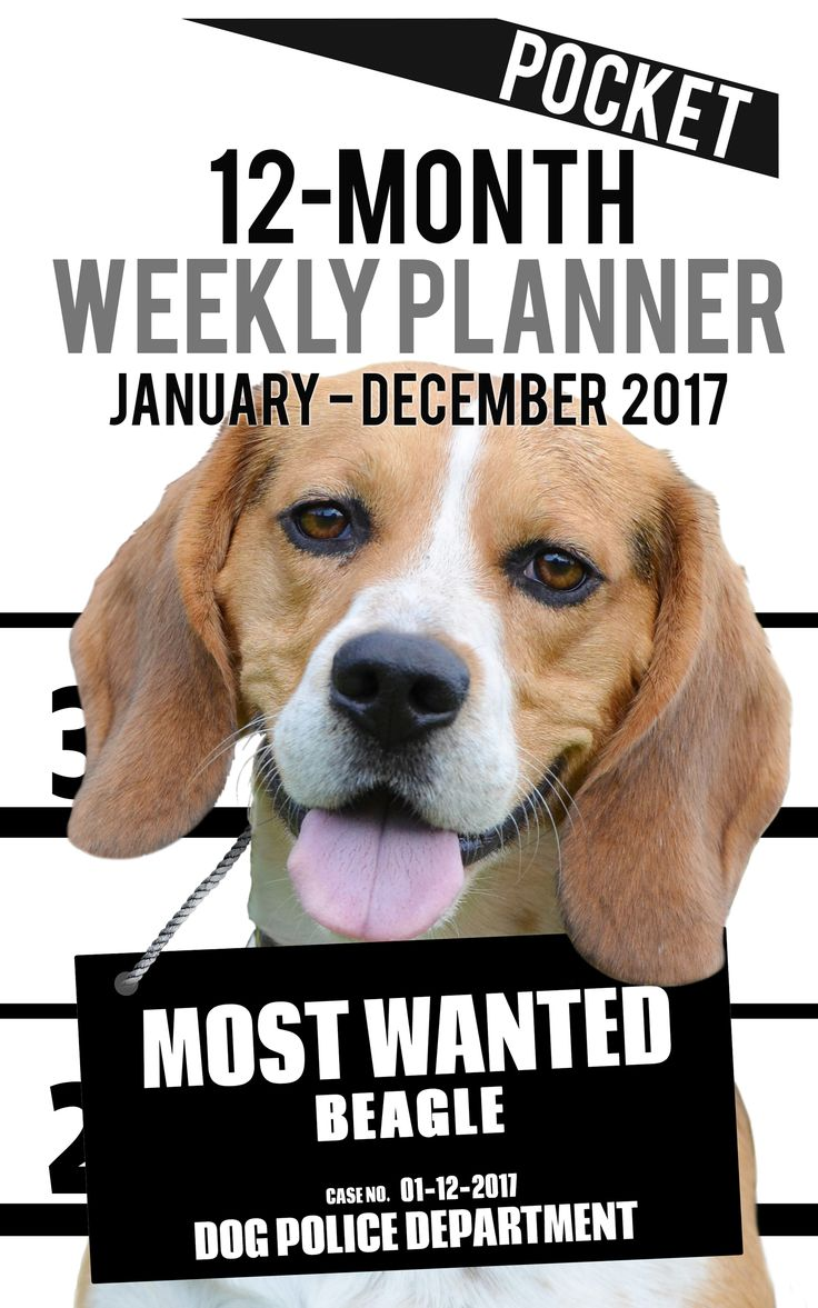 """2017 Pocket Weekly Planner - Most Wanted Beagle: Daily Diary Monthly Yearly Calendar (5inch x 8inch Dog Planners)2017-2018 Weekly Planner for Dog lovers - Beagle lovers in particular! Adorable Most Wanted Beagle image graces the cover of this 5"""" x 8"""" pocket size cute engagement calendar. Popular easy to use planner format shows a week-at-a-view to help keep you organized 7 days at a time.     This Calendar/planner covers 12 months (January 2017 -- December 2017)."""