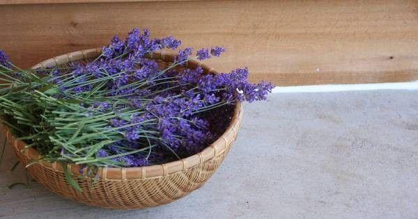 10 wunderbare Anwendungen für Lavendel – Nicht nur schön anzuschauen
