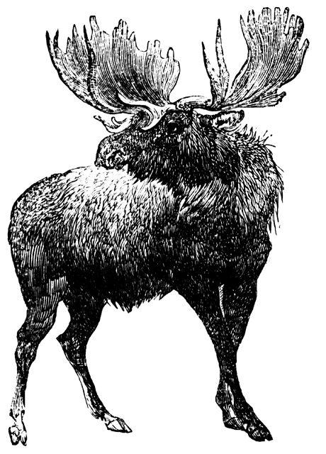 Moose clipart etc