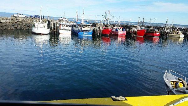 Photo: Howard Smith of Cradle Coast Tours #Tasmania article for think-tasmania.com