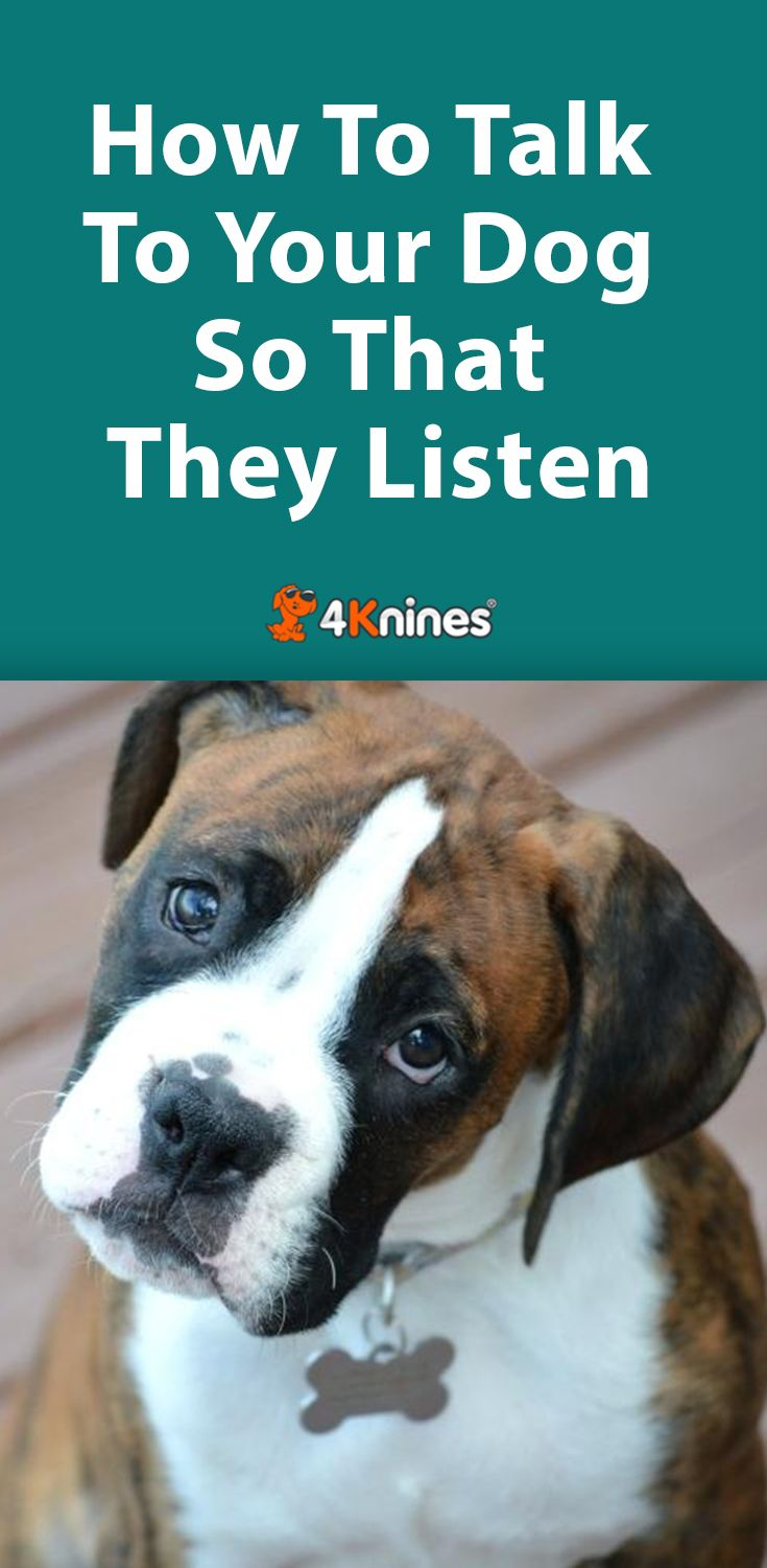Communication Fundamentals How To Talk To Your Dog So That They
