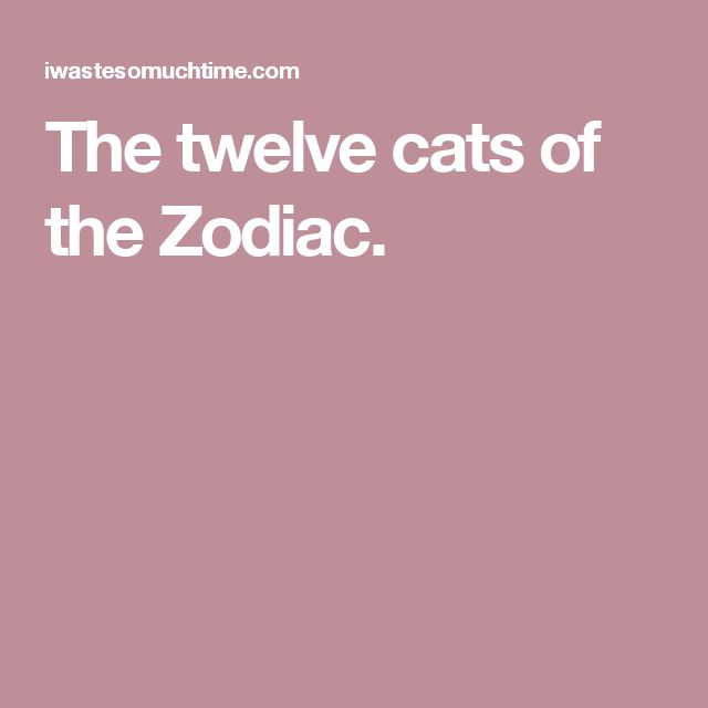 The twelve cats of the Zodiac.