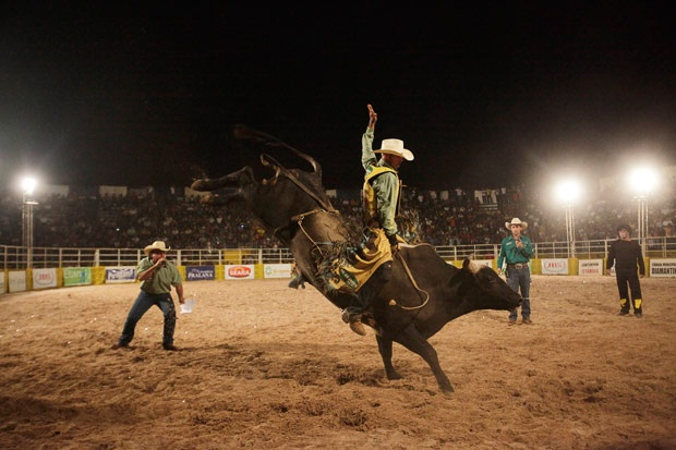 Rodeo!: Pbr Favs
