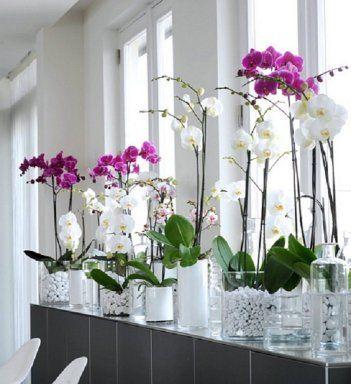 arreglos florales orquideas mariposa , Buscar con Google