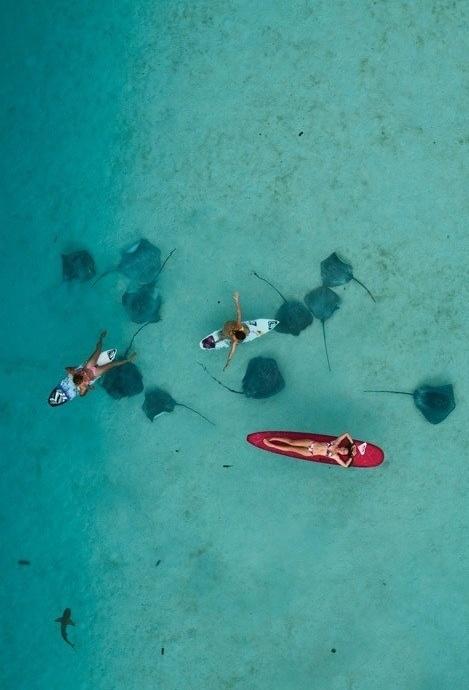 floating over stingrays